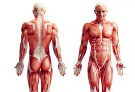 25岁后男人这里变软 男性肌肉衰退