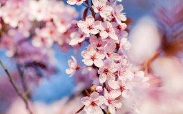 春天养生的误区要知道 春天养生要看