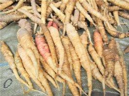 沙参怎么做有营养 沙参的功效和作用